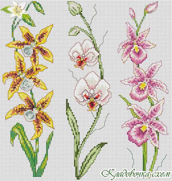 Вышивки схемы с орхидеями 347